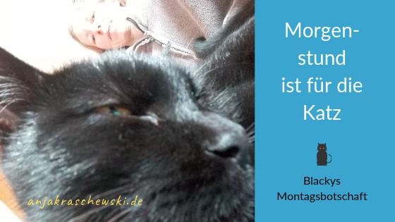 anjakraschewski-montagmitblacky-MorgenstundistfürdieKatz
