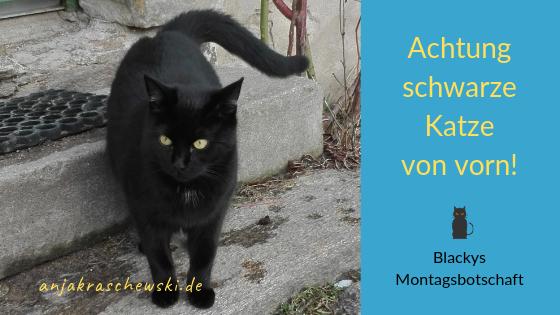 anjakraschewski-montagmitblacky-Katzevonvorn